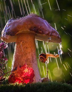 ...что мне дождик проливной...